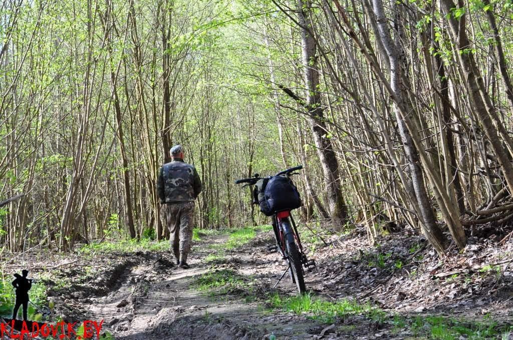 Велопрогулка на природе