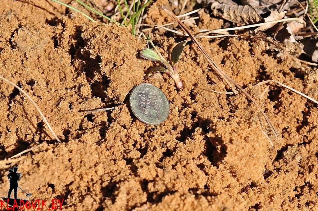 Поиск монет под дубом