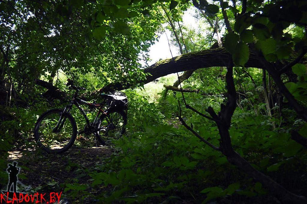 Коп на старой лесной дороге